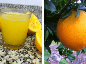 Ya tenemos naranjas